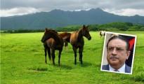 zardari horse